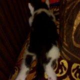 Котёнок. Фото 4. Салават.