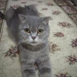 Кошка. Фото 1. Буйнакск.
