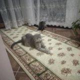 Кошка. Фото 2. Буйнакск.