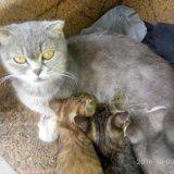 Кошка. Фото 3. Буйнакск.