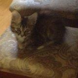 Котик. Фото 2.