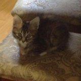 Котик. Фото 4.