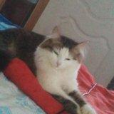 Кошка,1.5 года. Фото 2.