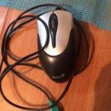 Мышка. Фото 1.