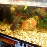 Аквари.рыбка. Фото 2. Балаково.