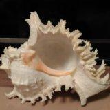 Ракушка для аквариума. Фото 1. Котельники.
