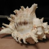 Ракушка для аквариума. Фото 2. Котельники.