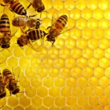 Мёд липа+разнотравье. Фото 1.