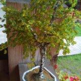 Дерево из бисера. Фото 1.
