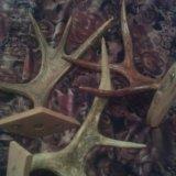 З штуки оленьих рогов. Фото 3.