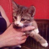 Котёнок даром. Фото 1. Тюмень.