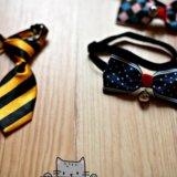 Аксессуары для собак и кошек. Фото 2.