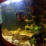 Рыбы. Фото 1.