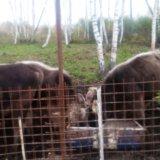Животные. Фото 1.