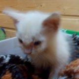Котёнок. Фото 1. Краснодар.