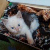 Котёнок. Фото 2. Краснодар.