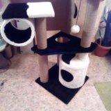 Комплекс для кошки. Фото 1.