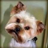 Стрижка собак. Фото 4.