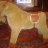 Конь. Фото 2.