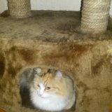 Кошкин дом.мягкий. Фото 1.