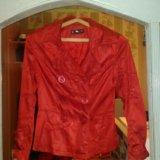 Куртка,ветровка. Фото 1.