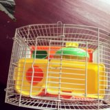 Клетка 🐹. Фото 2.