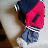 Зимний комбез для маленькой собачки. Фото 1.