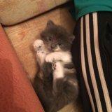 Отдам котёнка. Фото 2.