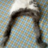 Шапка кроличья. Фото 1.