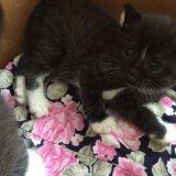 Отдам котика в добрые руки. Фото 2.