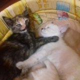 Кошечки. Фото 1. Пенза.