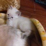 Кошечки. Фото 2. Пенза.