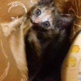 Кошечки. Фото 3. Пенза.