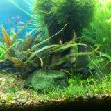 Моллинезии креветки улитки растения в аквариум. Фото 2. Видное.