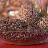 Кедровые орехи. Фото 1. Тюмень.