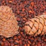Кедровые орехи. Фото 2. Тюмень.