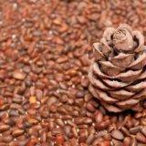 Кедровые орехи. Фото 3. Тюмень.