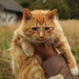 Рыжий деньгопритягатель в добрый дом!. Фото 1. Псков.