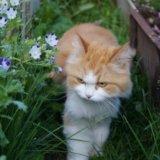 Кошка рада бесплатно. Фото 2.