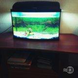Аквариум акваэль на 40 литров. Фото 2.