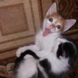 Котята в хорошие руки. Фото 2.