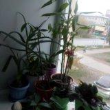 Растения. Фото 1.