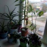 Растения. Фото 2.