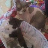 Котята в дар. Фото 1.