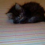 Кошечка 1,5 в добрые руки. Фото 1. Новосибирск.