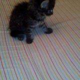 Кошечка 1,5 в добрые руки. Фото 2. Новосибирск.