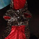 Платье на маленькую собачку. Фото 1.