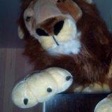 Лев. Фото 1.