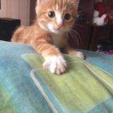 Котёнок. Фото 3.