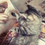 Отдам британского котенка. Фото 2.
